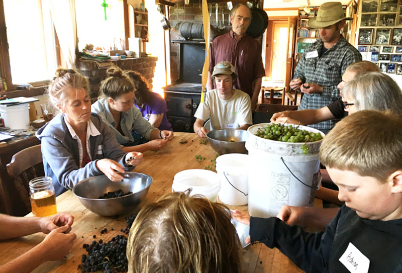 At our workshop on The Integrated Farm, as at most of our learning sessions, participants get hands-on experience in farm and homestead living. Here they help us process grapes to be made into grape juice.