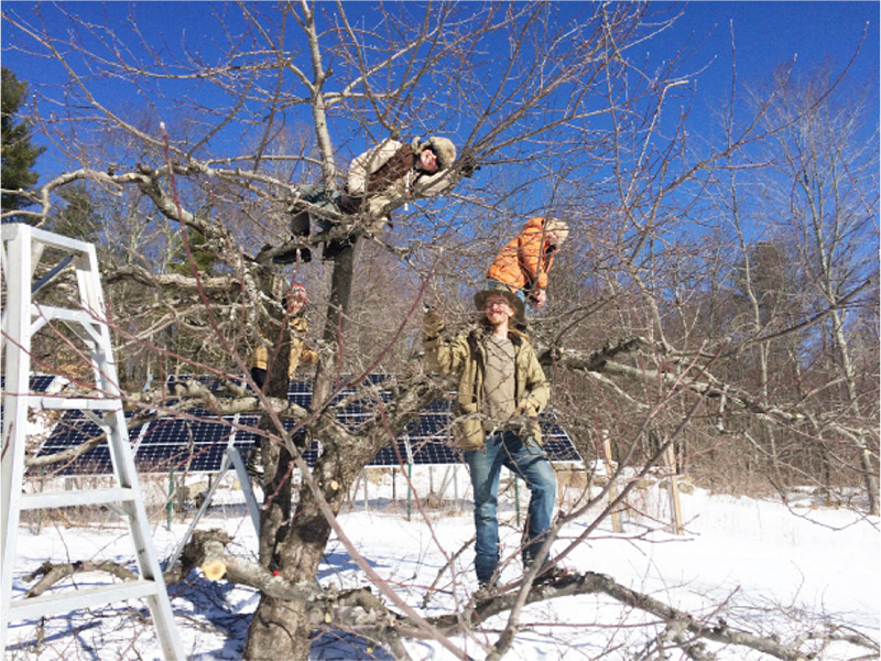 Winter pruning is essential for good orchard pro-duction. Here our hardy crew of Sean, Clare, Lindsay and Julie risk life and limb for a good fruit harvest.