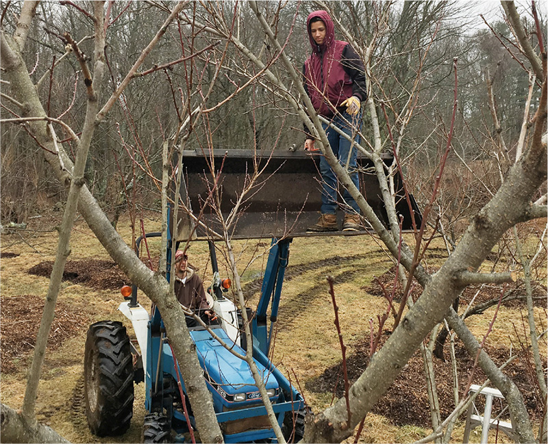 Brent and Mario were inseparable, Brent for his command of the tractor, Mario for his enthusiasm and adventurous spirit. Here they prune fruit trees in late winter.